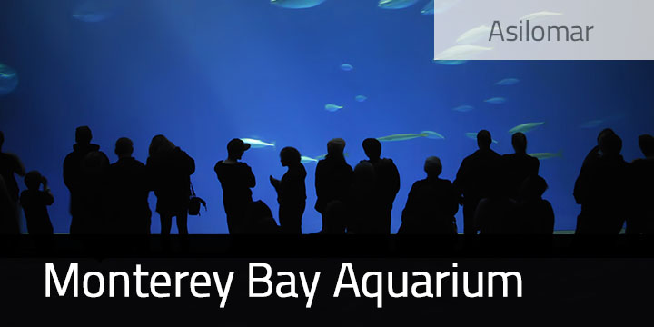 Monterey Bay Aquarium and Other Monterey Activities